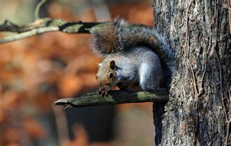 New Jersey to allow air guns for hunting squirrels and