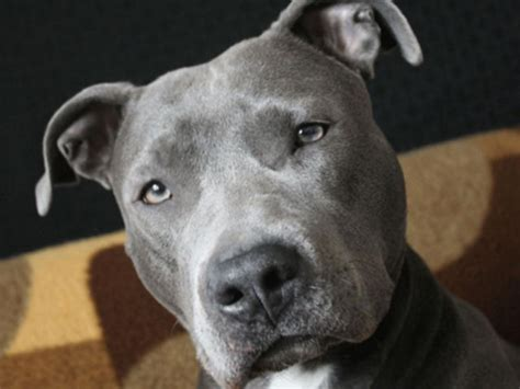 Guess The Dog Breed?   Playbuzz