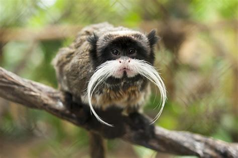 10 Truly Unique Animals You Won't Believe Actually Exist