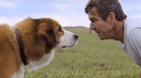 'A Dog's Purpose' Review: Canine 'Cloud Atlas' is a