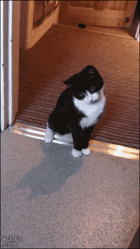 Funny Cat Gets Scared (gif) | LuvBat