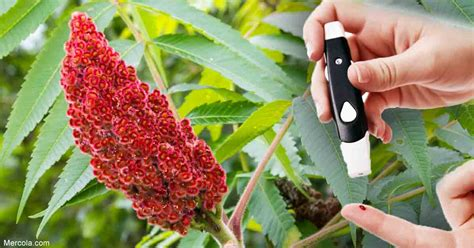 Can Sumac Help Your Blood Sugar Levels?