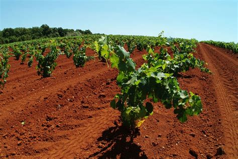 Total Croatia Wine - A Wine Road for the Red Istria