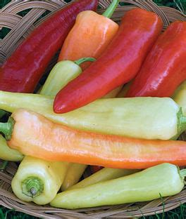 Pepper Plants and Seeds - Hot, Sweet, Bell, Jalapeno