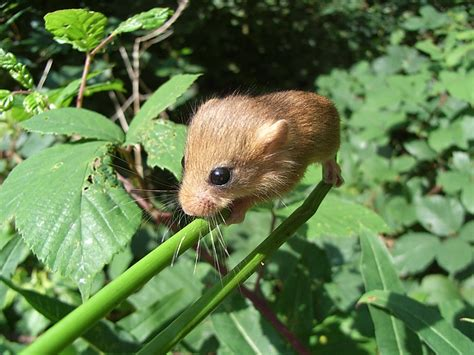 Spring Search for Small Mammals! – Worcestershire Mammal Group